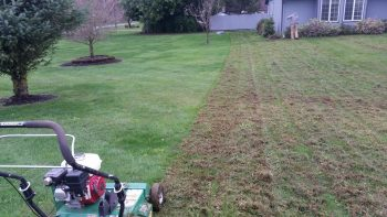 Dethatching & Lawn Aerating