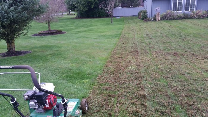 Weed Control Dethatching & Aerating in Camas